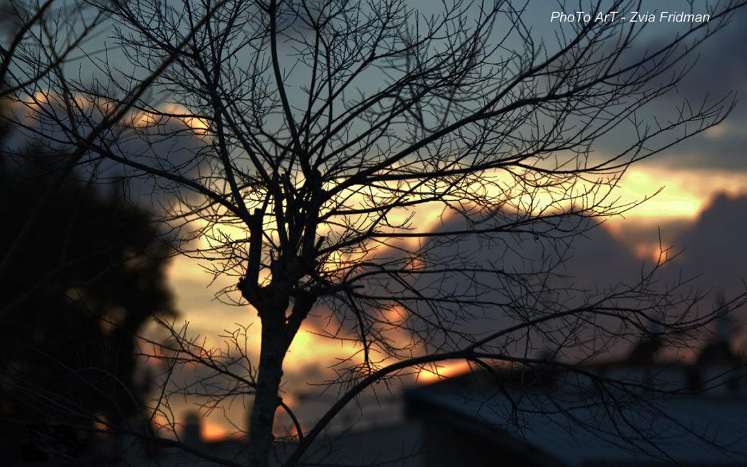 חורפו של יום – צילום של צביה פרידמן