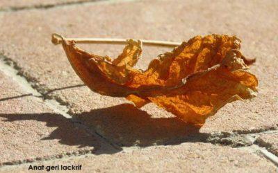 עלה שלכת – צילום של ענת גרי לקריף